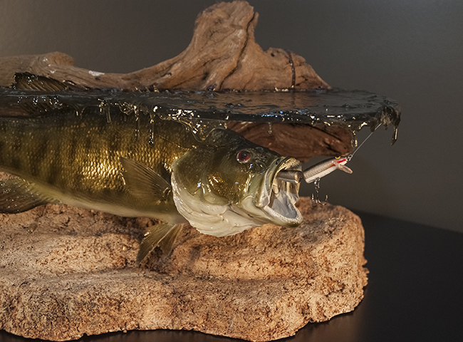 Fish taxidermy for Fish taxidermy prices