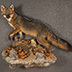 Fox Taxidermy