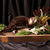 Small Mammal Taxidermy
